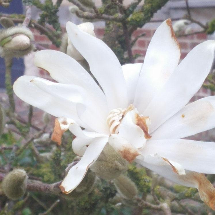 fleur carre